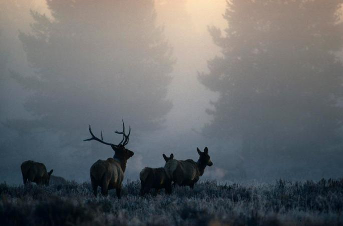 cold-morning-mist-and-rutting-elk-move-michael-s-quinton