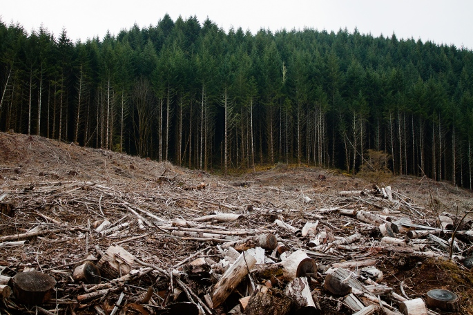 Clearcutting-Oregon