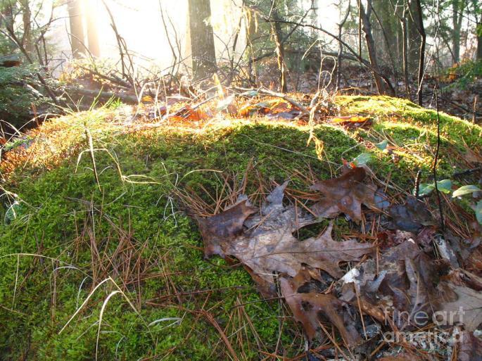 fairy-mound-lynn-marie-gildersleeve