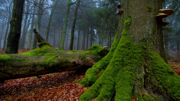 Forest-tree-covered-with-moss-wallpaper_138