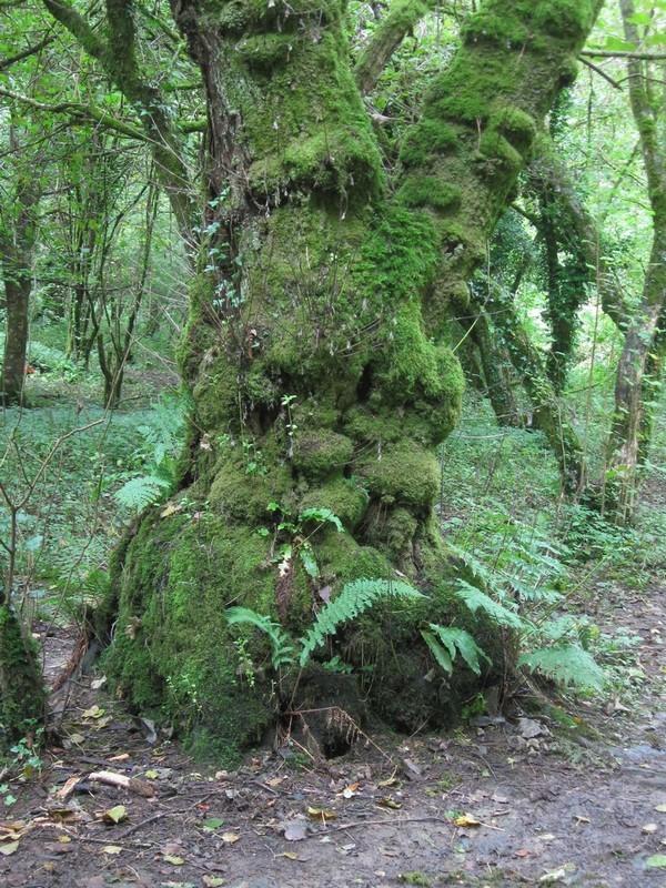 Green Man Tree 015