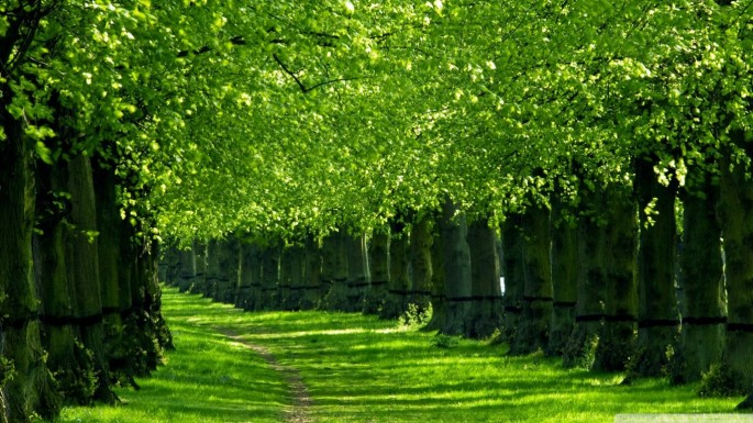 green_nature_trees_1366x768_13264