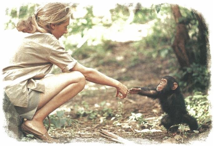 Jane-Goodall-and-chimp