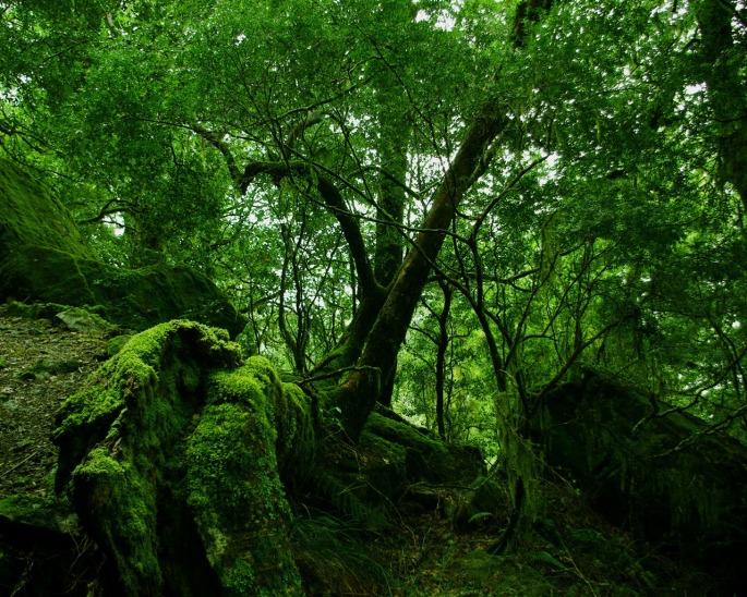 rainforest_moss_wallpaper_other_nature_wallpaper_1280_1024_1140