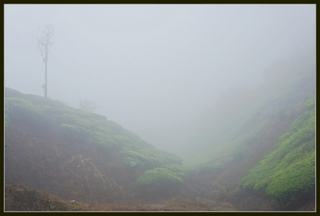 thick forest mist