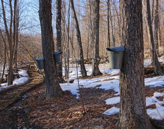 creative commons sugar bush