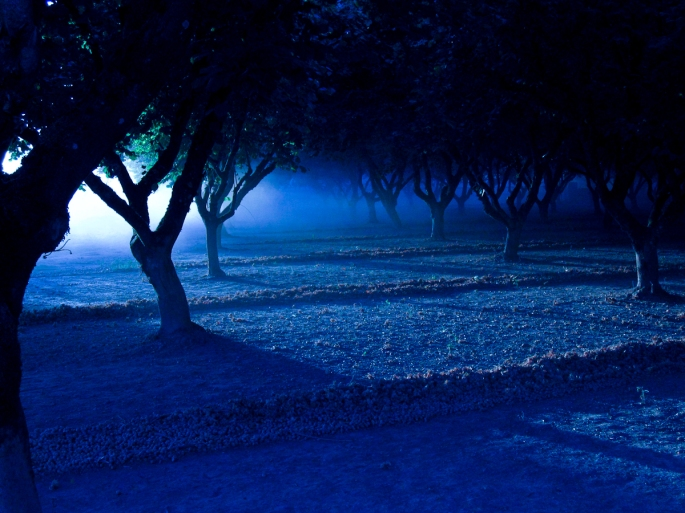 Dusty Orchard - color balanced to appear as night time.